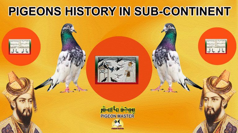 Pigeon History In Sub Continent