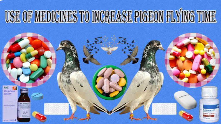 Use Of Medicines to Increase Pigeon Flying Time.