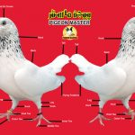 Pigeon's Outer Body Parts And Their Details