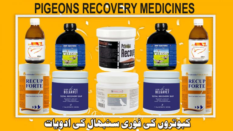 Pigeons Recovery Medicines