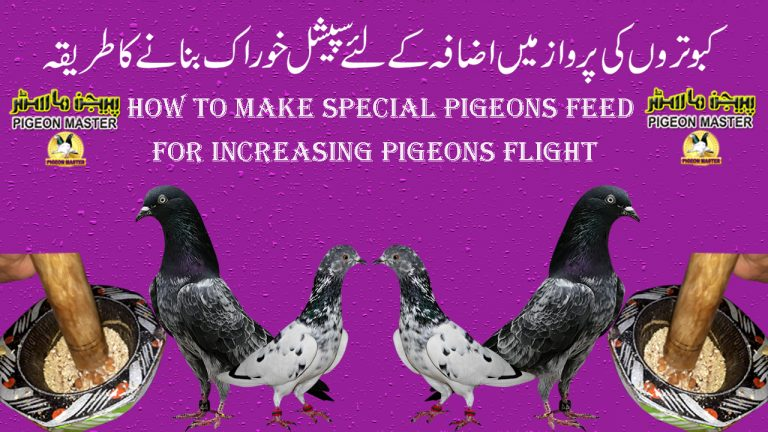 How To Make Special Feed For Pigeons