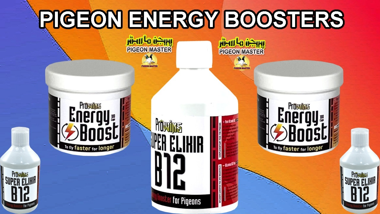 Pigeon Energy Boosters