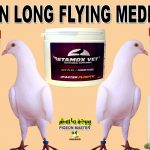 Pigeon Long Flying Medicine Victory Power Pills And Stamox Vet
