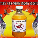Victory Plus Pigeons Energy Booster World Best Pigeons Flying Medicine