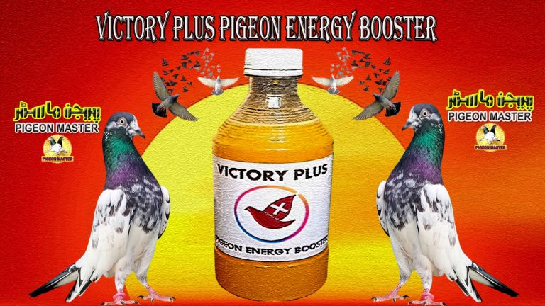 Victory Plus Pigeon Energy Booster