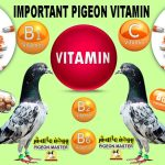 Important Pigeon Vitamin Information About All Essential Pigeon Vitamins
