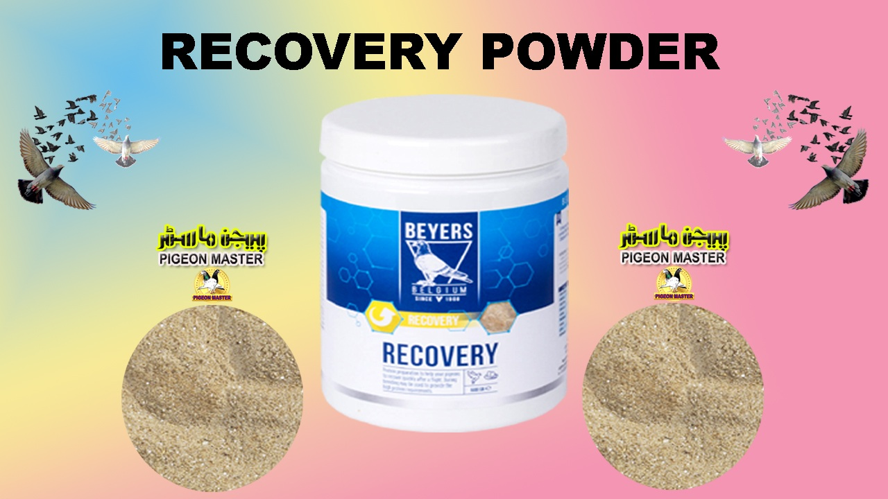 Recovery Powder Pigeon Recovery Product