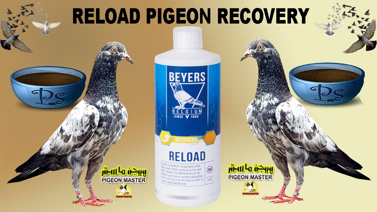 Reload For Pigeon Recovery