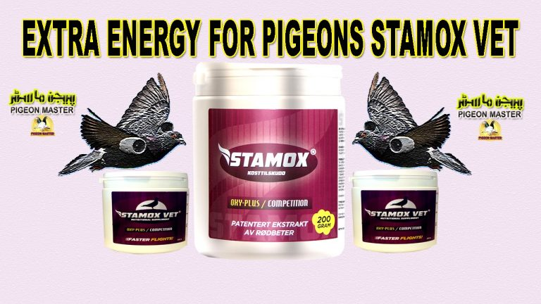 Beetroot Powder For Pigeon Energy