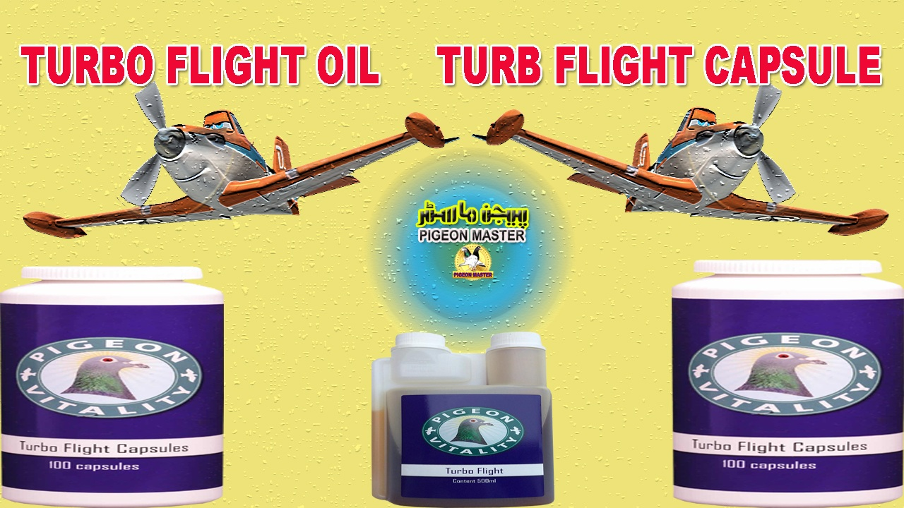 Turbo Flight Oil And Capsule Pigeon Medicine For Flying
